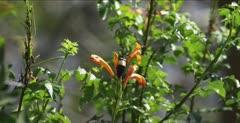 unknown beetle on flowers