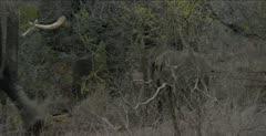 elephants baby walking