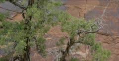Petroglyphs in Southern Utah