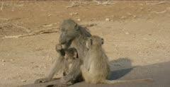 mama eating with baby, teenager grooming mom
