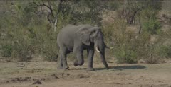 male walking to waterhole, turns when he sees first male and goes another way, third male comes in and can't decide which way to go