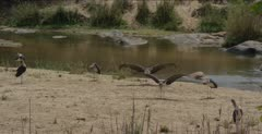 several opening wings along the Sabie River