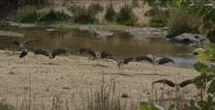 with wings out along the Sabie River, then some fold wings, wide