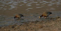 feeding in water