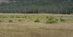 Round Prairie on upper Soda Butte Creek with Willows