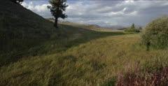 Lamar Valley, High Grass, Not Over-Grazed