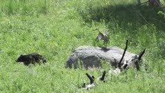 Black Bear and Sandhill Crane