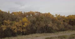 fall cottonwoods along Rio Grande east of San Antonio, New Mexico