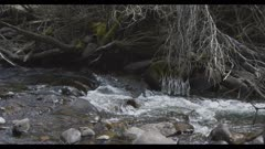 Creek flowing with some ice in trees slow motion wide Bear Creek Jardine Montana on Yellowstone NP border
