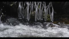 Creek flowing with some ice in trees close pan up from water to ice in trees Bear Creek Jardine Montana on Yellowstone NP border