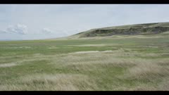 black tailed prairie dog town grassland with buffalo jump hill in background wide pan