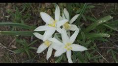 white flower find name