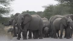 Elephants circling around baby