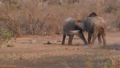 Elephant males fighting