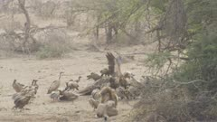 lots of African animals - giraffe, vultures, cape buffalo, lion