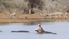 lots of African animals - hippos, kudu, warthogs