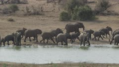 large group of African elephants
