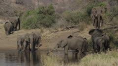 Elephant family leaving waterhole