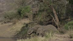 Elephants drinking and mingling around waterhole