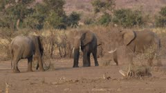 Male elephants fighting while others watch