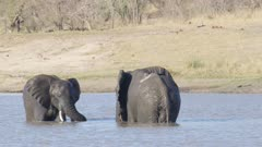 Two elephants play fighting in lake