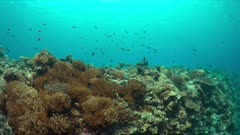 Edge of a colorful coral reef with healthy corals and plenty fish. 4k footage