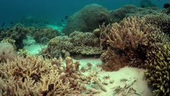 Colorful coral reef with healthy corals, plenty fish and a Bluepoint Stingray. 4k footage