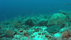 Green Sea turtle on a colorful coral reef with plenty fish. 4k footage