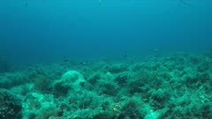 Blacktip reef shark on a coral reef. 4k footage