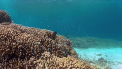 Moray eel on a colorful coral reef with many small fish. 4k footage