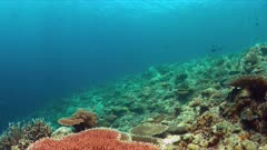 Colorful coral reef with a Whitetip reef Shark and plenty fish. 4k footage