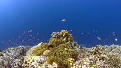 Colorful coral reef with plenty fish 4k footage