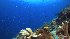 Edge of a colorful coral reef with plenty fish. 4k footage