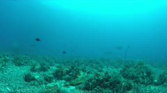 Coral reef with wire corals and plenty fish. 4k footage