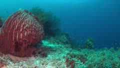 Colorful coral reef with a big sponge coral and plenty fish. 4k footage