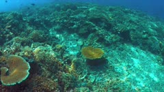 Moray eel swims over a colorful coral reef with many small fish. 4k footage