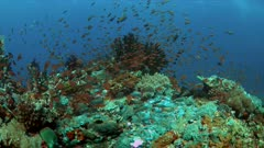 Colorful coral reef with plenty fish. 4k footage