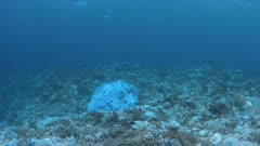 Bleached corals. Coral bleaching is the result of water heating. Above-average seawater temperatures caused by global warming have been identified as a leading cause of coral bleaching worldwide