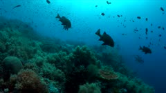 Colorful coral reef with healthy corals and plenty fish. 4k footage
