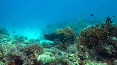 Grouper on a colorful coral reef. 4k footage