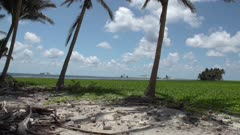 Pan of Clipperton atoll and lagoon from palm tree cluster