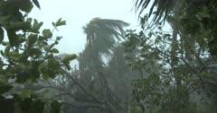 Damaging Hurricane Winds Lash Coastal Area