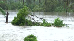 Large Tree Branch Washed Away By Fast Flowing Flood Waters