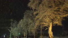 Trees Coated In Thick Snow At Night During Winter Storm