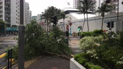 Strong Wind And Downed Tree Branch As Hurricane Hits City