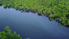 Aerial Footage Of Tropical Mangroves In Northern Australia