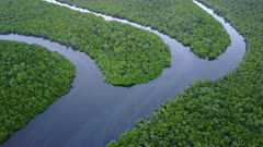 Aerial Footage Mangrove Swamp In Northern Australia