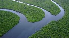Aerial Footage Mangrove Swamp In Northern Australia