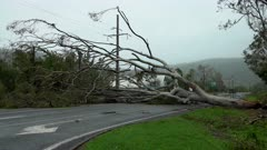 Large Tree Blocks Road In Aftermath Of Hurricane Landfall And Strong Wind