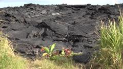 Kilauea Volcano Eruption 2018 - Offering To Gods On Fresh Lava Flow